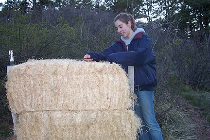 2006 Work Party Amy Perkins